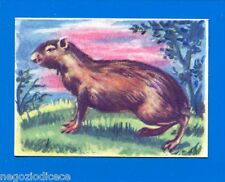 ANIMALI - Lampo 1964 - Figurina-Sticker n. 124 - AGUTI -New