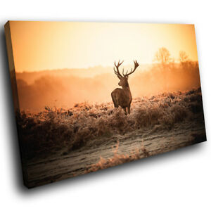 A500 Brown Stag Sunrise Forest Funky Animal Canvas Wall Art Large Picture Prints