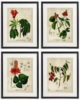 Vintage Botanical Floral No. 09 Art Home Wall Art Print Set of 4 Prints UNFRAMED