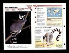 Ring Tailed Lemur Wildlife Fact File Mammal Animal Card Home School Study 1.87