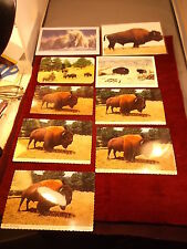 #1 of 3, Lot Of Nos & Vtg Postcards, Western & Native Americana, Buffaloes/Bison