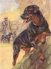 ROTTWEILER LOVELY IMAGE ON DOG GREETINGS NOTE CARD
