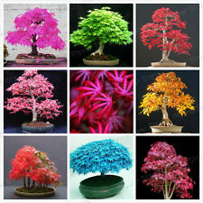 20 pcs 8 Kinds JAPANESE MAPLE Bonsai Tree Seeds Garden Plants for Home