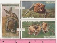 Noctule and Long Eared Bat and The Teeth of Bat THREE 90+ Y/O Ad Trade Cards 1