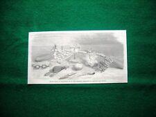Gravure année 1860 divers objets de l'expédition de sir John Franklin