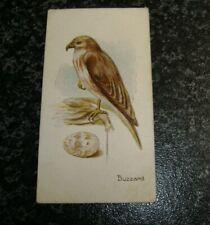 Lambert & Butler - Birds & Eggs No38 - Buzzard