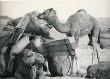 HOGGAR c. 1950 - Caravane au Repos Algérie Photo P. Ichac - NV 187