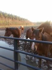 Love Horses ? Please Help! 100% Donation To Rescue