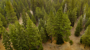 NORTHERN CALI LAND FOR SALE WITH LEVELED CAMPING GROUND.