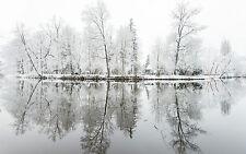 Encadrée Imprimer-couvertes de neige arbres sur une petite île du lac (Photo Poster hiver)