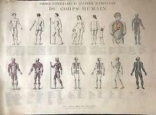 LE CORPS HUMAIN : FORMES EXTERIEURS ET ANATOMIE ÉLÉMENTAIRE