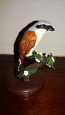 Pie-grièche - Red backed Shrike - Oiseau de collection - Livret A4 inclus
