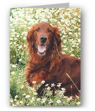 Irish Setter Greeting Card - Dog Red
