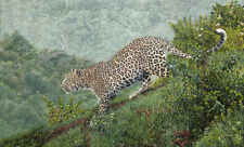 """Guy Combes """" Breaking Cover """" Limited Edition Giclee Canvas African Rhino"""