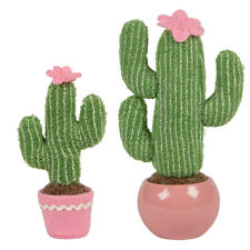 Buy Cactus Potted Houseplants Flowers | eBay on hibiscus house plants, different types cactus plants, pruning cactus house plants, sunflower house plants, blooming cactus plants, tall house plants, flowering succulent plant identification, indoor plants, types of succulent plants, flower house plants, agave house plants, household cactus plants, angel house plants, watering cactus house plants, edible cactus house plants, common house plants, peach tree house plants, lilies house plants, yucca house plants, begonias house plants,