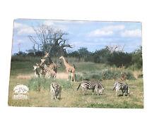 Animal Kingdom Safari Attraction Disney Postcard Zebra Giraffe UNPOSTED