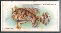 Frogfish c90 Y/O Trade Ad Card