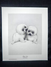 "Ruth Morehead ""Harp Seals"" Cute Open Edition Lithograph"