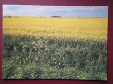 POSTCARD LINCOLNSHIRE RAPE FIELDS