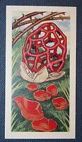 FUNGI    Lattice Fungus & Orange Elf Cup Mushrooms   Colour Card