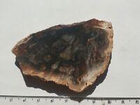 Superb Slice Of  Fossil Wood - Madagascar - 7.4cm