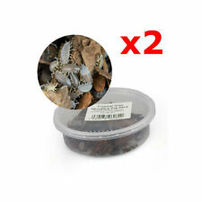 More details for tropical grey woodlice bio-active clean-up crew springtail alternative 2 packs