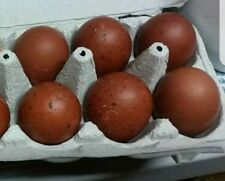 1 egg or more Black Copper Marans hatching egg. Show quality. Npip