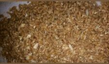 **BEST PRICE**100 Maggots Spikes Grubs Live Bait Ice Fishing Bait