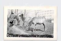 RPPC REAL PHOTO POSTCARD MISSOURI Deer Swope Park Kansas City