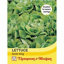 Thompson & Morgan-Verduras-Lechuga Rey Ártico - 500 semillas