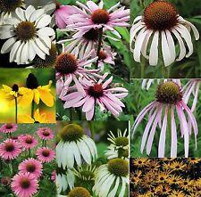 6 ECHINACEA/RUDBECKIA MIXED MEDIUM PLUG PLANTS - HARDY PERENNIALS
