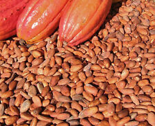 1 lb of 100% all natural Cocoa Cacao bean from Fiji US Seller