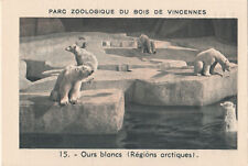 15. Ours blanc Polaire Ursus maritimus Polar bear IMAGE CARD BON POINT 30s