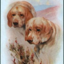 Clumber Spaniel Dogs With Heather,Chromolithograph, Arthur Wardle Old Postcard