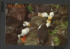 Colour Postcard Portrait Pair Horned Puffins Luvin  Alaska  unposted