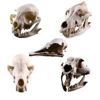 Resin Dinosaur Skull Model Simulated Animal Skeleton Office Decor Craft