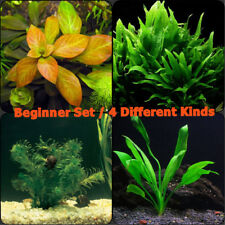 Live Aquarium Plants Set For Beginner Freshwater Amazon Sword Java Fern More!