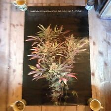 1995 vintage Canabis/Cannabis Poster,KYLE'S SPECIAL BLEND PURPLE KUSH,hash pipe