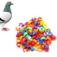 100Pcs Poultry Dove Chicken Hen Pigeon Leg Bird Chicks Duck Parrot Rings^