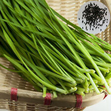 500Pcs Delicious Chinese Chives Seeds Garden Green Onion Vegetable Plant Utility