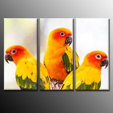 FRAMED Bird Picture Canvas Print Poster Decor Parrots Wall Art For Home Decor-3p