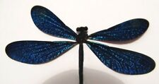 Metallic Blue Damselfly from the Philippines  GORGEOUS!  Insect (PACK of 3)