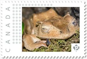 BORNEO EARED FROG = Picture Postage stamp MNH Canada 2018 [p18-06sn18]
