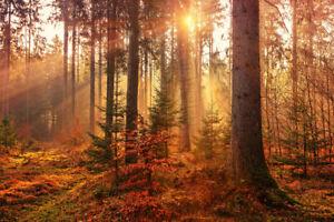 Canvas HD Prints Painting Golden Autumn Landscape Picture Wall Art Home Decor