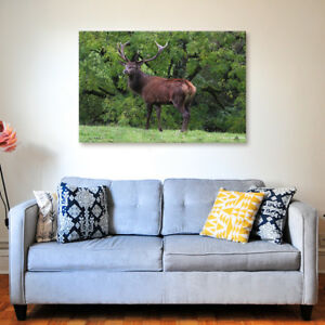 Exmoor Stag - Various Sizes - North Devon Canvas - Ready to Hang