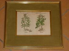 Originaldrucke (1800-1899) mit Blume & Pflanze und Kupferstich