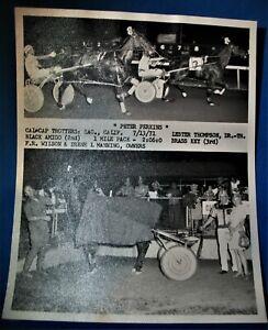 Listing for 1983gb only 7 13 71 Harness Racing WinnersPhoto PETER PERKINS winner
