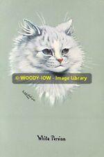 rp10237 - Louis Wain Cat - White Persian - photo 6x4
