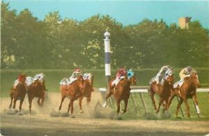 Belmont Park 1950s Horse Racing Long Island New York Lumitone postcard 4835