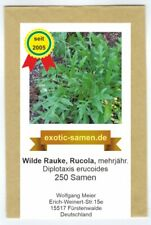 Diplotaxis Tenuifolium H838 WILD ROCKET SEEDS 2000 graines de ROQUETTE SAUVAGE